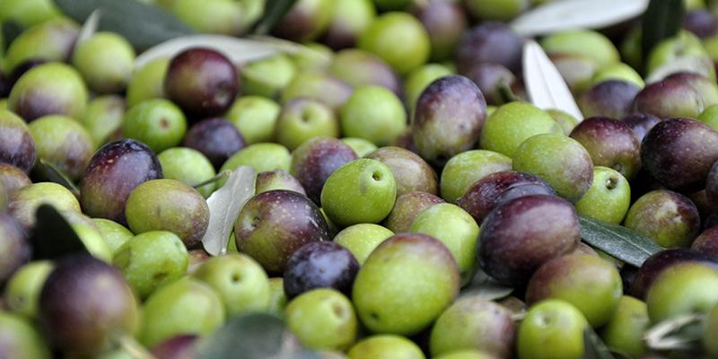 Bezugsquellen Olivenöl